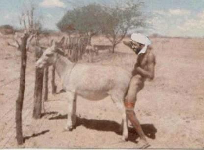 Donkey Fucking Porn Pics
