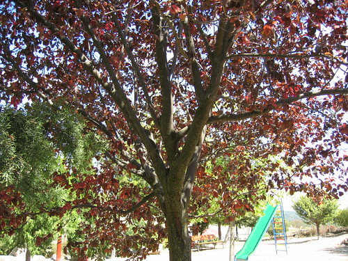 Árbol del parque