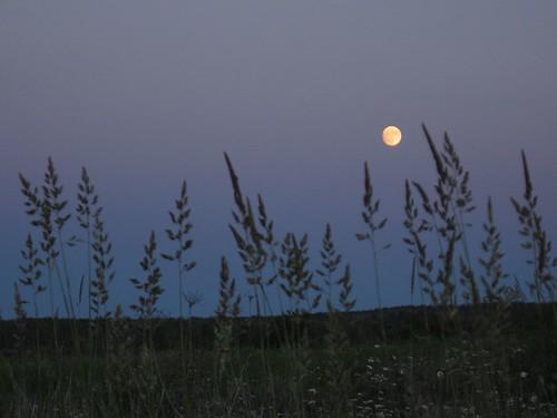 Grassy Moonrise