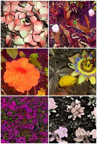 Flores y Photoshop
