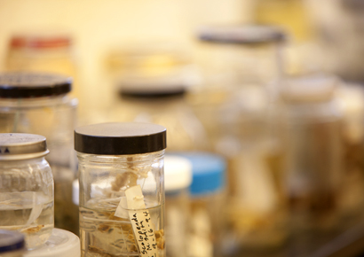 Newman University lab