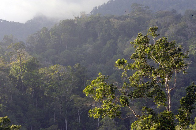 Habitat Tangkoko, Sulawesi