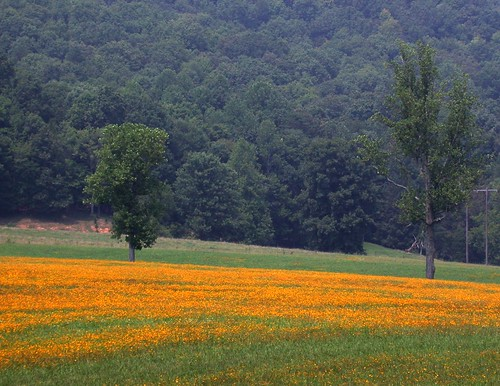 flowers field yellow farm tennessee country hill roadside harriman roanecounty