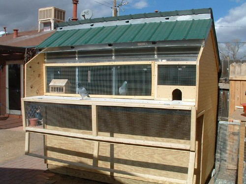 Small pigeon loft ideas pictures to pin on pinterest for Pigeon coop ideas