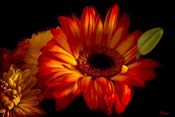 Des fleurs pour la f te des m res flickr photo sharing - Fleur fete des meres ...