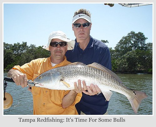 Fly fish addiction tampa redfishing is heating up tampa for Fishing report bay area