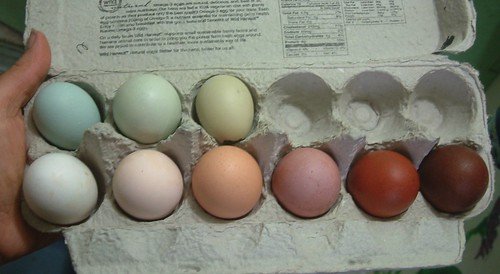 Our egg colors so far