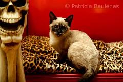 Zoofi de Patricia Baulenas