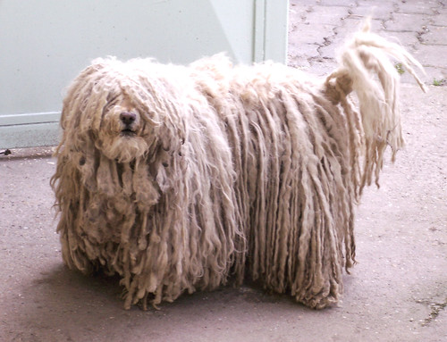 Black Dog With Dreads