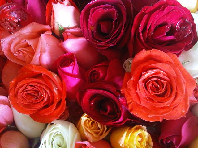 Photo - Rosas rosas hermosas ...
