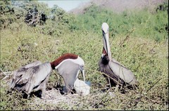 stork(0.0), vulture(0.0), ciconiiformes(0.0), marabou stork(0.0), savanna(0.0), animal(1.0), fauna(1.0), crane(1.0), safari(1.0), bird(1.0), wildlife(1.0),