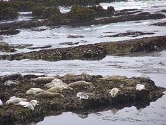 wetland, stream, water, rapid, river, loch, tide pool, wave, shore, coast, rock,