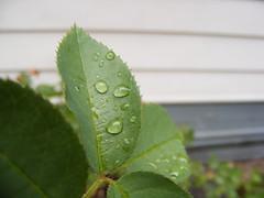 Rain Drops (pro)