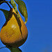 Ripening in the Sun by algo