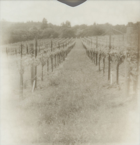 film landscape polaroid vineyard vine trellis sebastopol slr680 grape px100 furlong theimpossibleproject