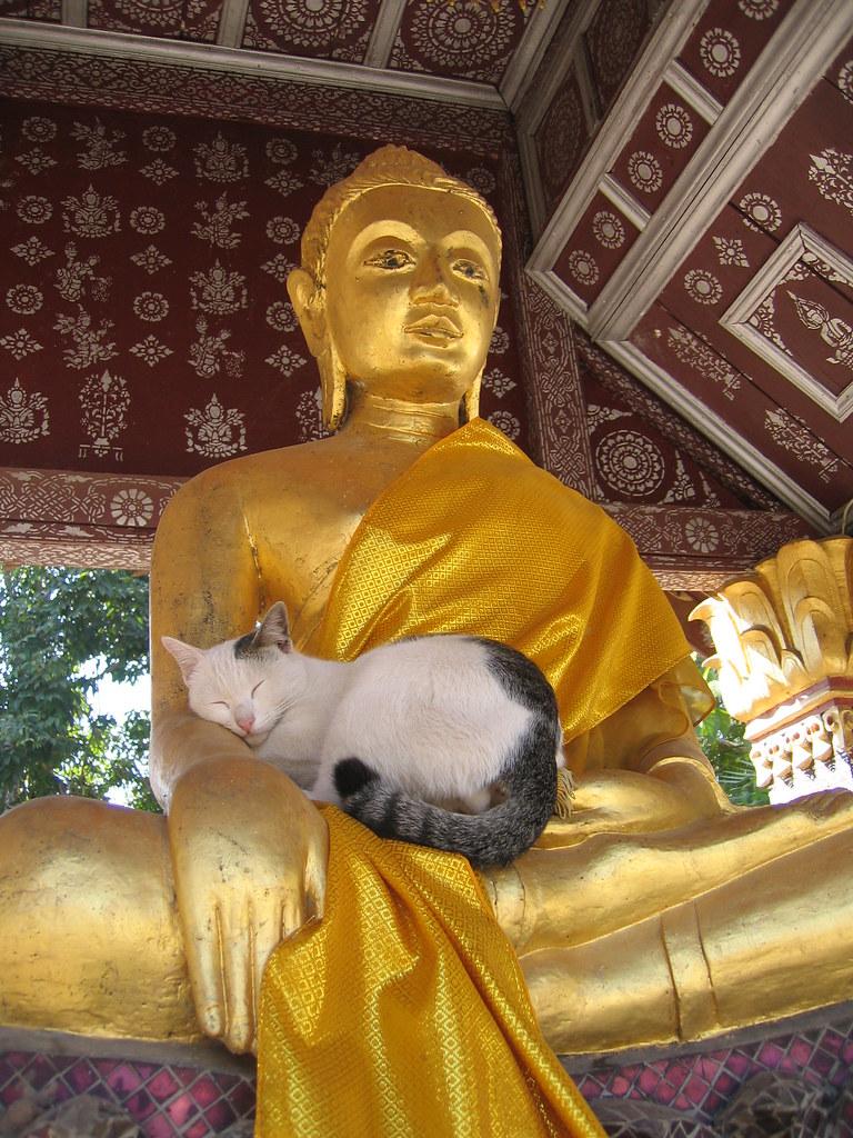 La leggenda felina buddista proveniente dalla Thailandia
