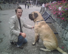 street dog(0.0), animal(1.0), broholmer(1.0), dog(1.0), tosa(1.0), pet(1.0), mammal(1.0), guard dog(1.0), bullmastiff(1.0), boerboel(1.0),