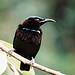 Rifle Bird