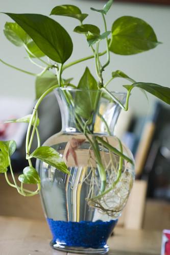 Betta than a bowl betta fish aquariums betta tank for Best plants for betta fish