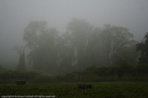 morning summer nature fog sunrise landscape flora haybails canoneos350 ridgefieldtownpasture ©andhuballrightsreserved