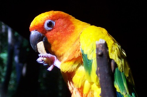 orange bird and chip.sm