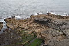 Continental Shelf - Wexford Style