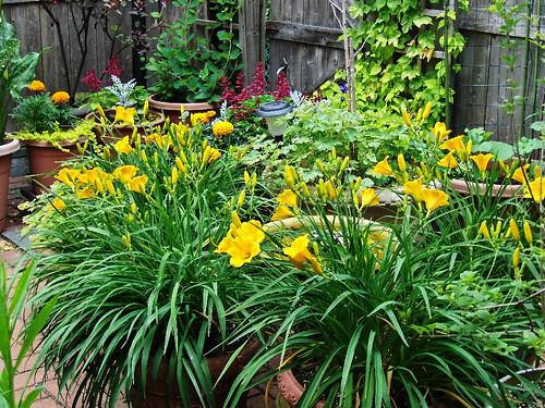 Low maintenance container flower plants for Low maintenance garden pot plants