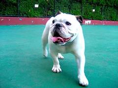 Carleton Court Dog Park in Boston, MA