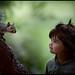 fairy tale by duoli