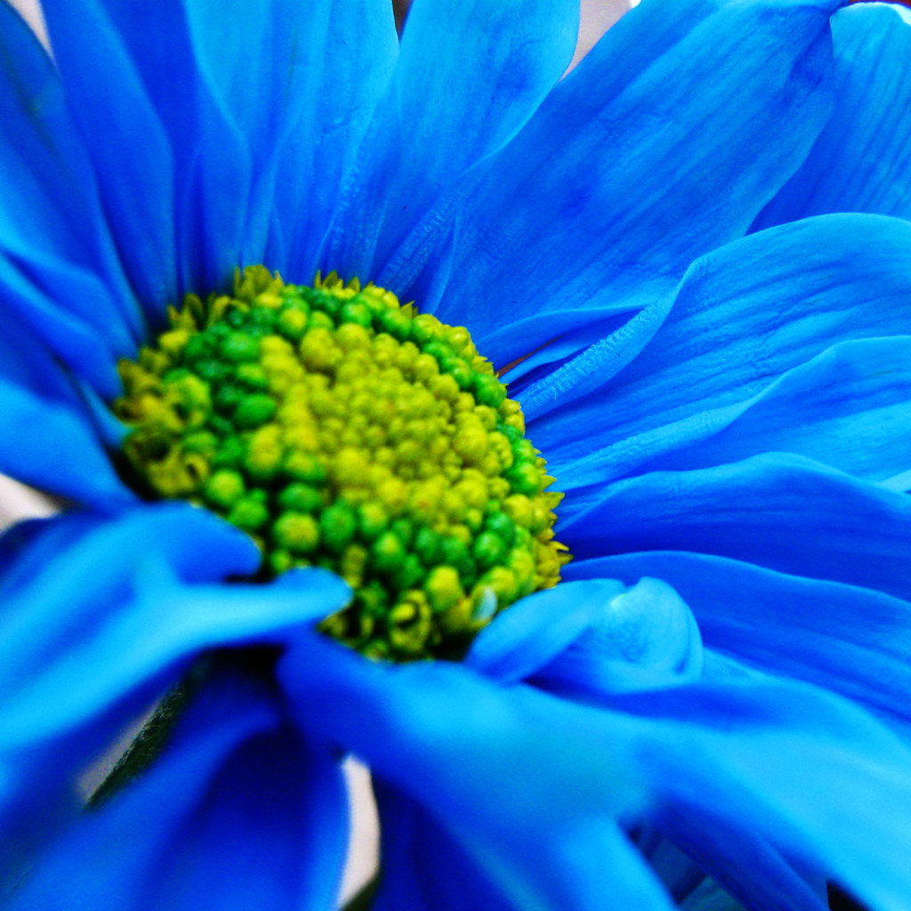 Blue Daisy Color Abstract Photos Is Bleu