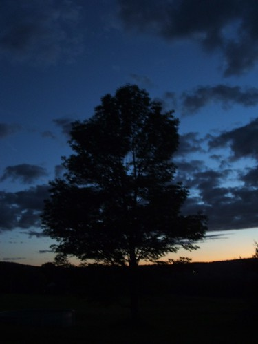 sunset newyork tree nature upstate rusnica