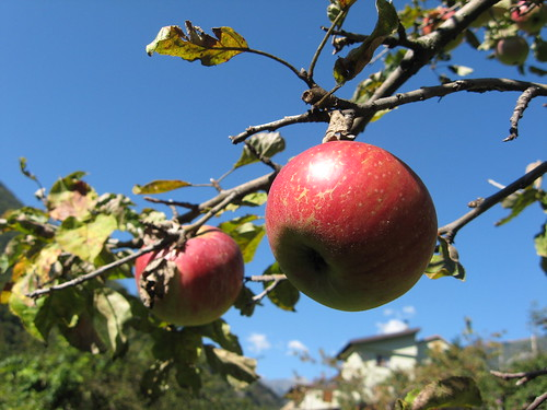 An Apple a Day: Nutrition Lessons Learned at the Orchard