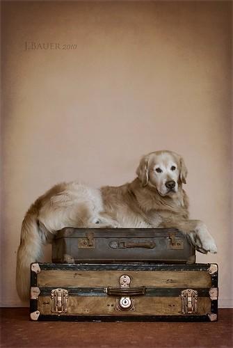19/52  traveling companion