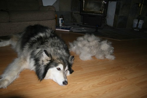 Shedding season