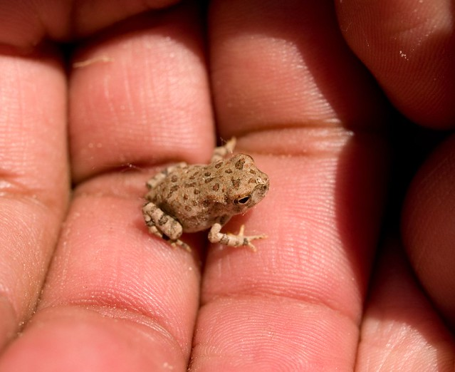 Tiny hopper
