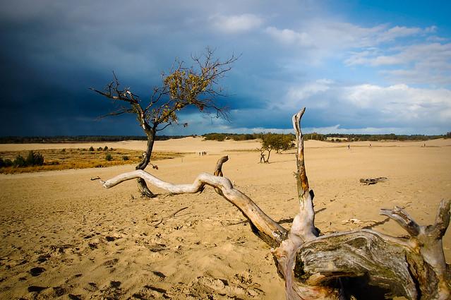 Afbeeldingsresultaten voor drunense duinen
