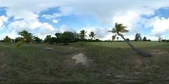 Slanted Palm Tree