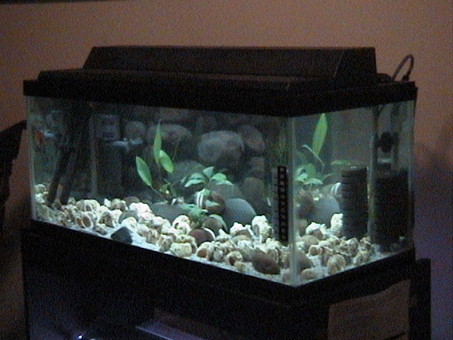 Angle view of 20 gallon long aquarium for multies flickr for 20 gallon long fish tank