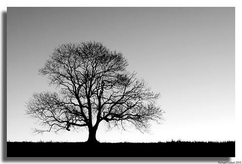 autumn bw tree silhouette sunrise blackwhite hampshire sharp tonal cy2 challengeyouwinner justpentax pentaxk20d