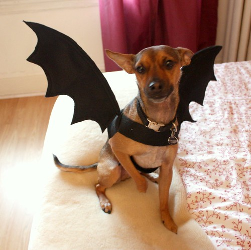 Easy do it yourself dog halloween costumes unique homemade costumes easy do it yourself dog halloween costumes tutorial dog bat costume life at cloverhill solutioingenieria Images