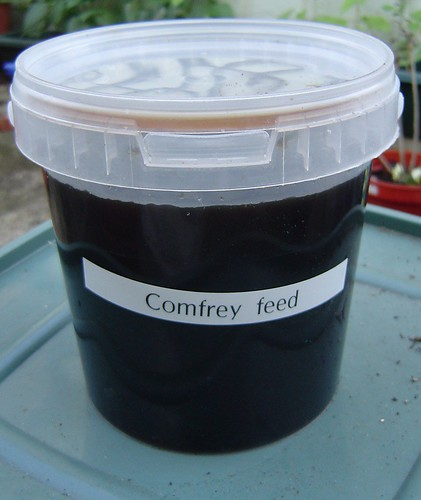 Comfrey fertilizer