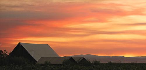 california pink light sunset cloud sun sunlight foothills yellow clouds gold vines day sundown hills end streaks vinyard vinyards