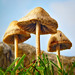 Basidiomycetes - Photo (c) John, some rights reserved (CC BY-NC-SA)