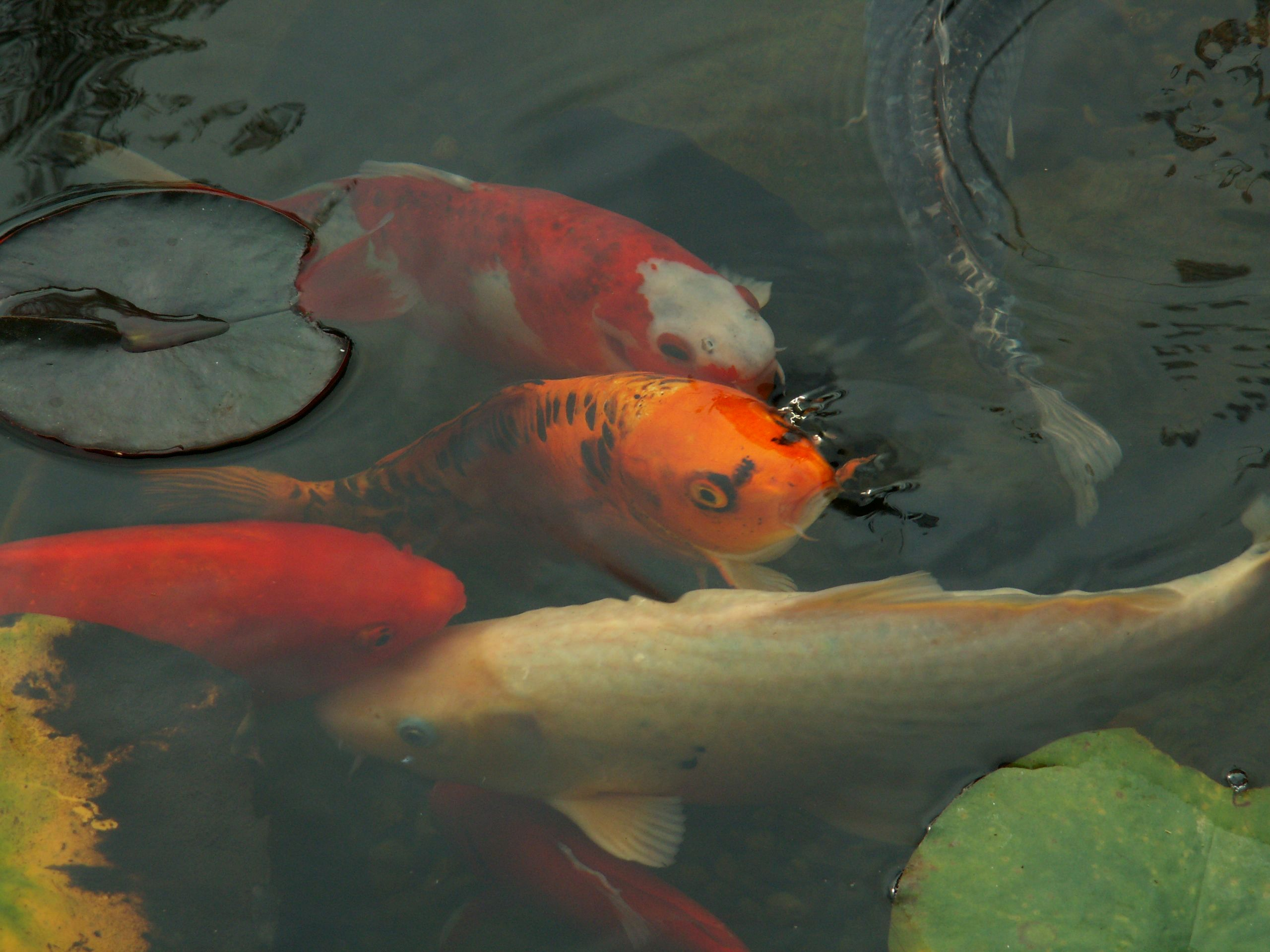 The History of Aquariums, Seekyt