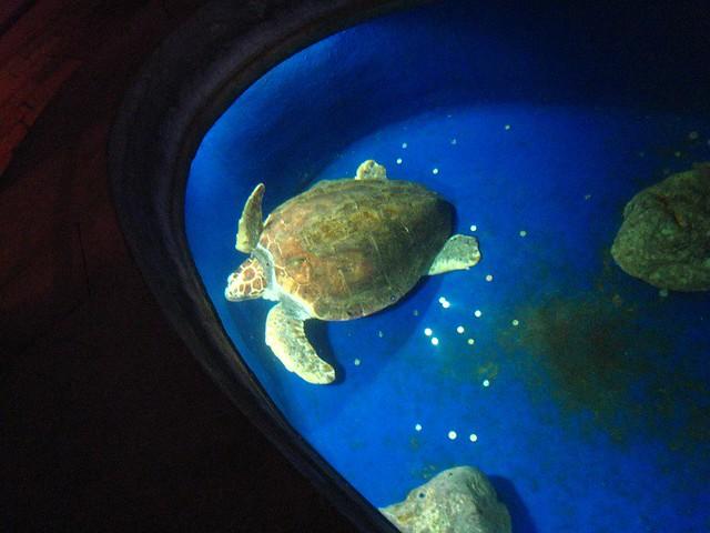 Sea turtle at the Dubrovnik aquarium