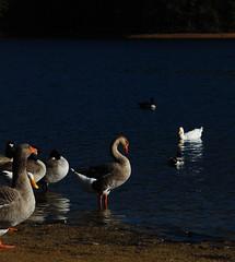 Mirrored Birds