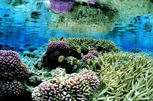 Arrecifes de coral en el atolón de Palmyra, Islas de la Línea