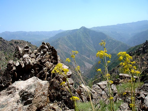 flowers mountains landscape hiking tajikistan romeet