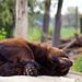 Sleepy Bear by bryguy1955