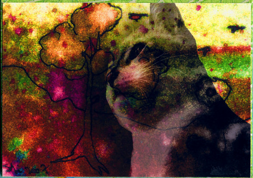 "ATC 130 ""A Cat's Dream"""